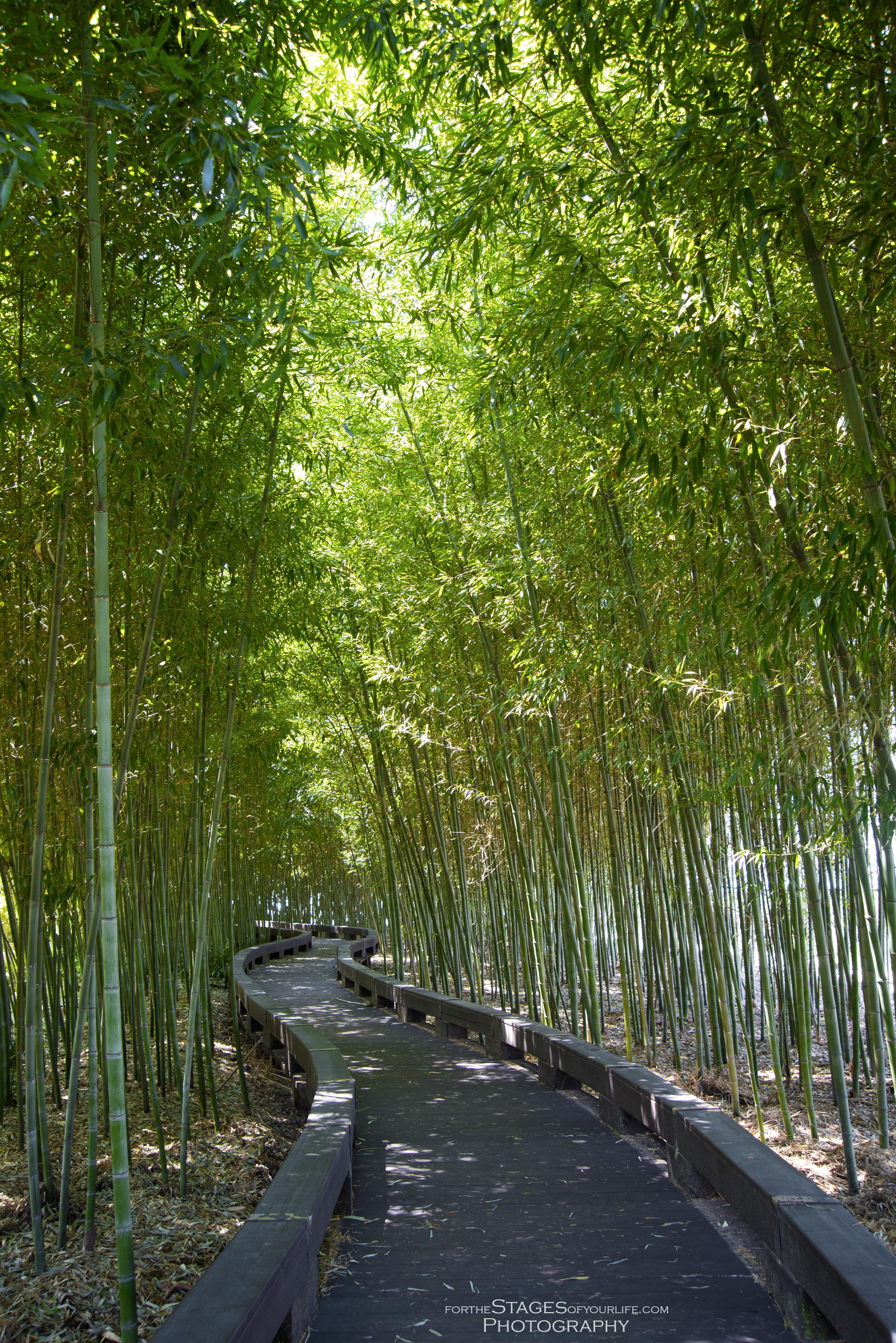Damyang bamboo garden south korea stages photography for Bamboo garden